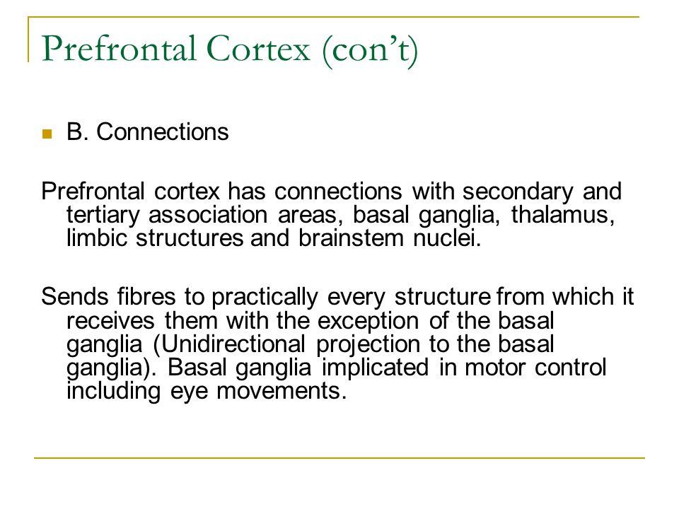 Prefrontal Cortex (con't) B.