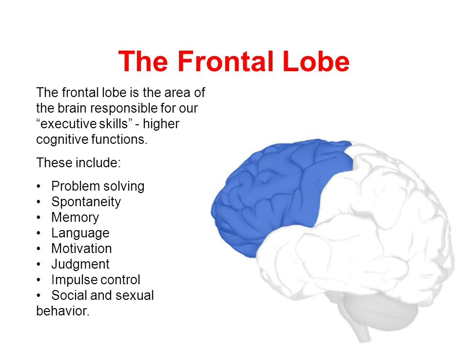 Occipital Lobe Damage Occipital lobeOccipital lobe injuries occur from blows to the back of the head.