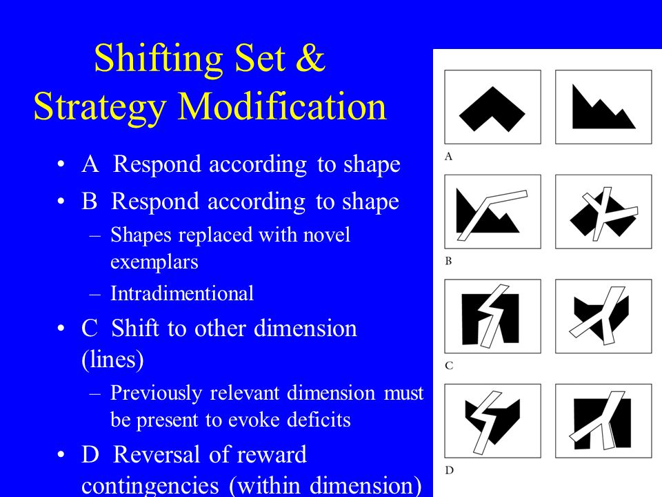 Shifting Set & Strategy Modification (Dias et al, 1997; Slamecka, 1968; Owen, 1991) A Respond according to shape B Respond according to shape –Shapes replaced with novel exemplars –Intradimentional C Shift to other dimension (lines) –Previously relevant dimension must be present to evoke deficits D Reversal of reward contingencies (within dimension)