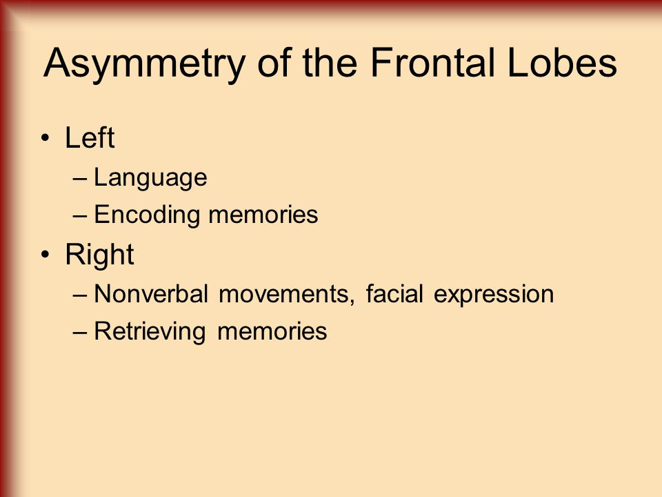 Asymmetry of the Frontal Lobes Left –Language –Encoding memories Right –Nonverbal movements, facial expression –Retrieving memories