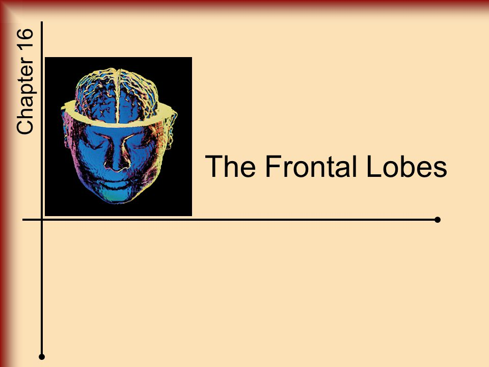 Chapter 16 The Frontal Lobes