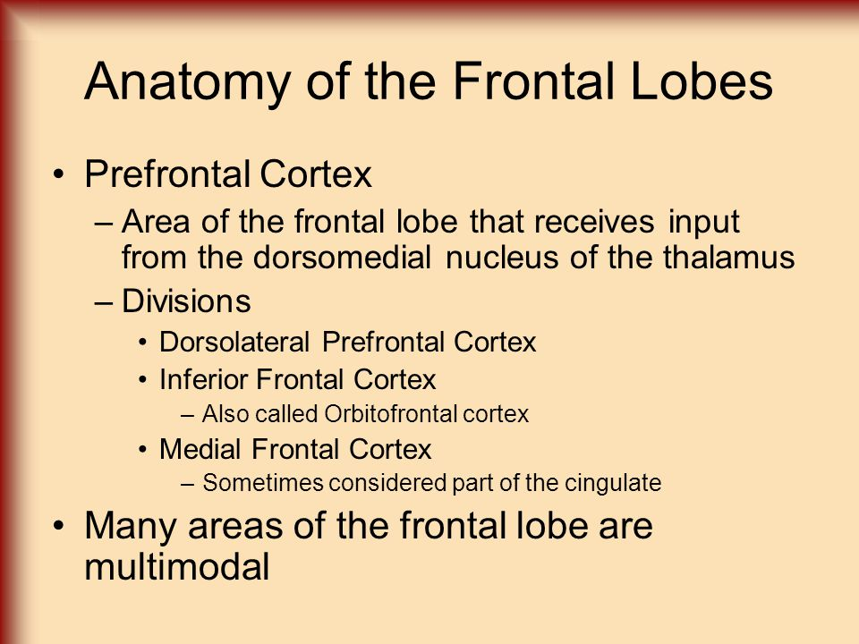 Anatomy of the Frontal Lobes Prefrontal Cortex –Area of the frontal lobe that receives input from the dorsomedial nucleus of the thalamus –Divisions D