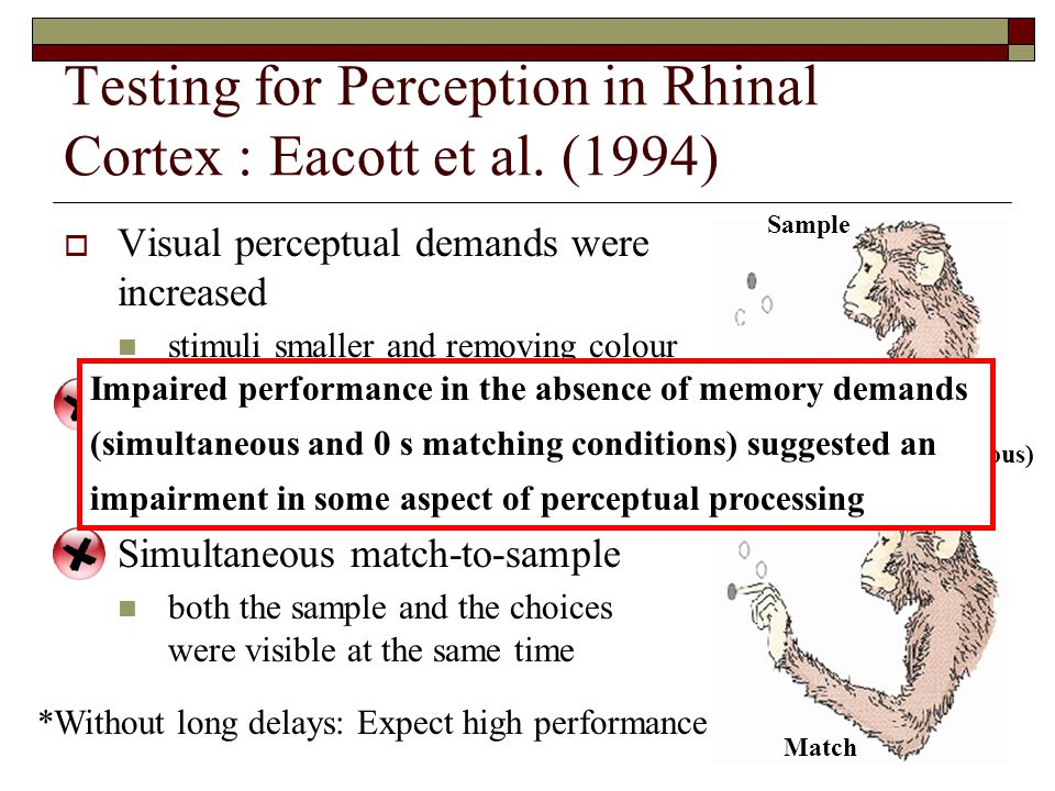 Testing for Perception in Rhinal Cortex : Eacott et al.