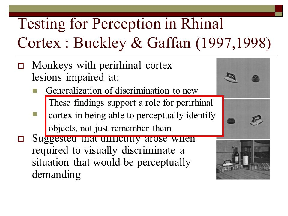 Testing for Perception in Rhinal Cortex : Buckley & Gaffan (1997,1998)  Monkeys with perirhinal cortex lesions impaired at: Generalization of discrimination to new views of familiar objects Discriminating large but not small stimulus set  Suggested that difficulty arose when required to visually discriminate a situation that would be perceptually demanding These findings support a role for perirhinal cortex in being able to perceptually identify objects, not just remember them.