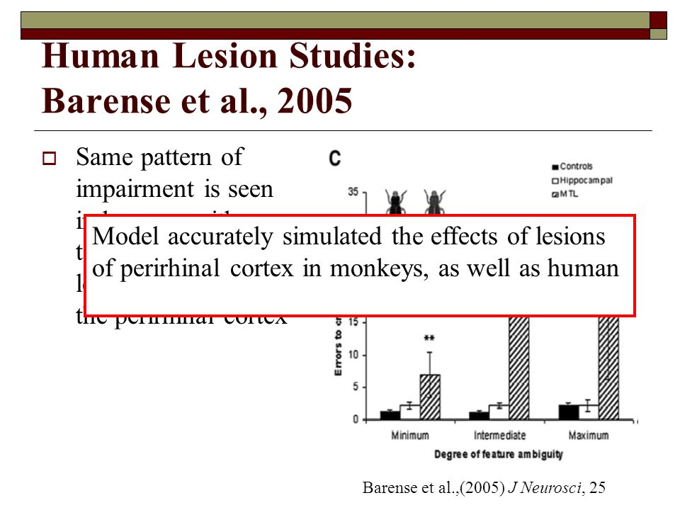 Human Lesion Studies: Barense et al., 2005  Same pattern of impairment is seen in humans with temporal cortex lesions that include the perirhinal cortex Barense et al.,(2005) J Neurosci, 25 Model accurately simulated the effects of lesions of perirhinal cortex in monkeys, as well as human