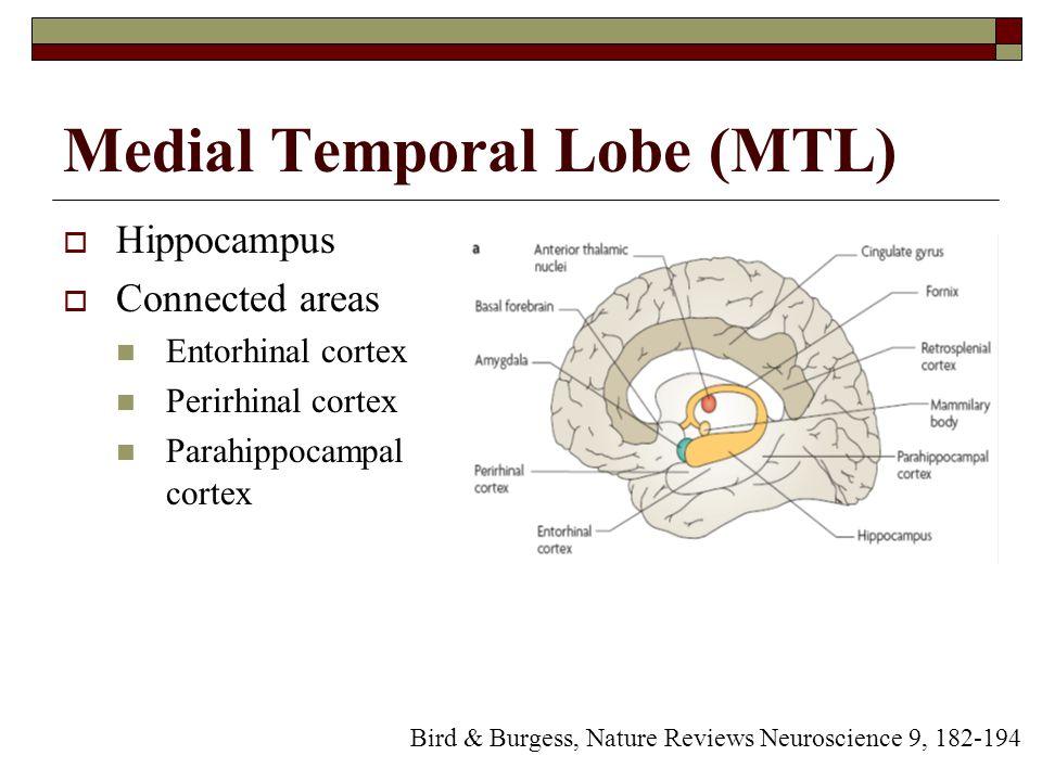 Medial Temporal Lobe (MTL)  Hippocampus  Connected areas Entorhinal cortex Perirhinal cortex Parahippocampal cortex Bird & Burgess, Nature Reviews Neuroscience 9, 182-194