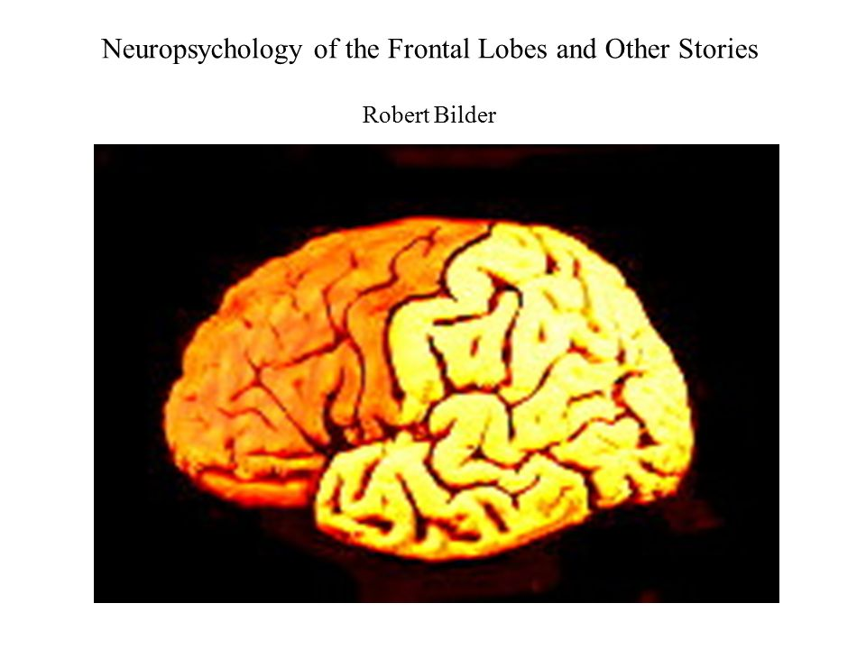 Neuropsychology of the Frontal Lobes and Other Stories Robert Bilder