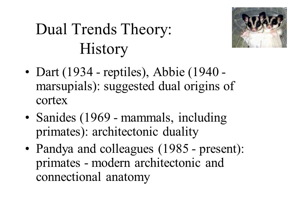 Dual Trends Theory: History Dart ( reptiles), Abbie ( marsupials): suggested dual origins of cortex Sanides ( mammals, including primates): architectonic duality Pandya and colleagues ( present): primates - modern architectonic and connectional anatomy