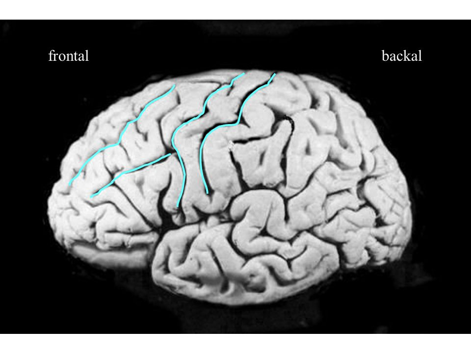frontalbackal