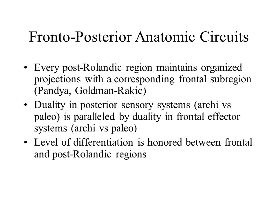Fronto-Posterior Anatomic Circuits Every post-Rolandic region maintains organized projections with a corresponding frontal subregion (Pandya, Goldman-Rakic) Duality in posterior sensory systems (archi vs paleo) is paralleled by duality in frontal effector systems (archi vs paleo) Level of differentiation is honored between frontal and post-Rolandic regions