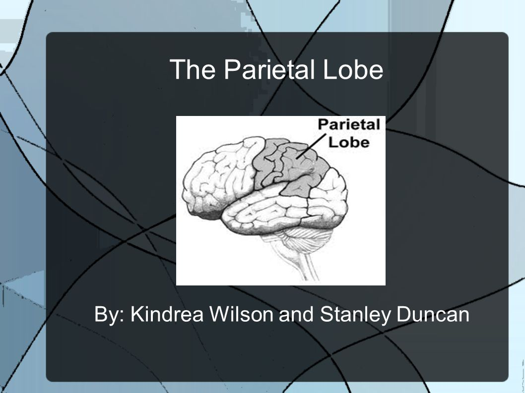 The Parietal Lobe By: Kindrea Wilson and Stanley Duncan