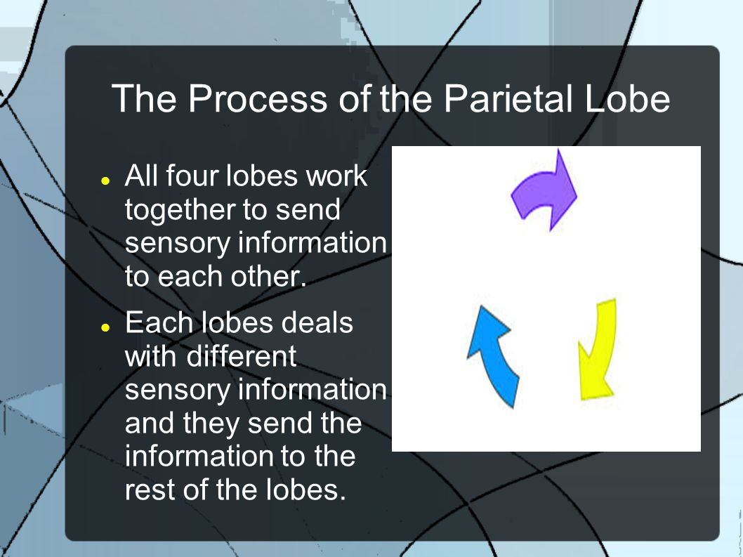 The Process of the Parietal Lobe All four lobes work together to send sensory information to each other. Each lobes deals with different sensory infor
