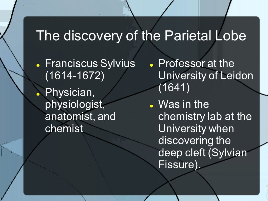The discovery of the Parietal Lobe Franciscus Sylvius (1614-1672) Physician, physiologist, anatomist, and chemist Professor at the University of Leido