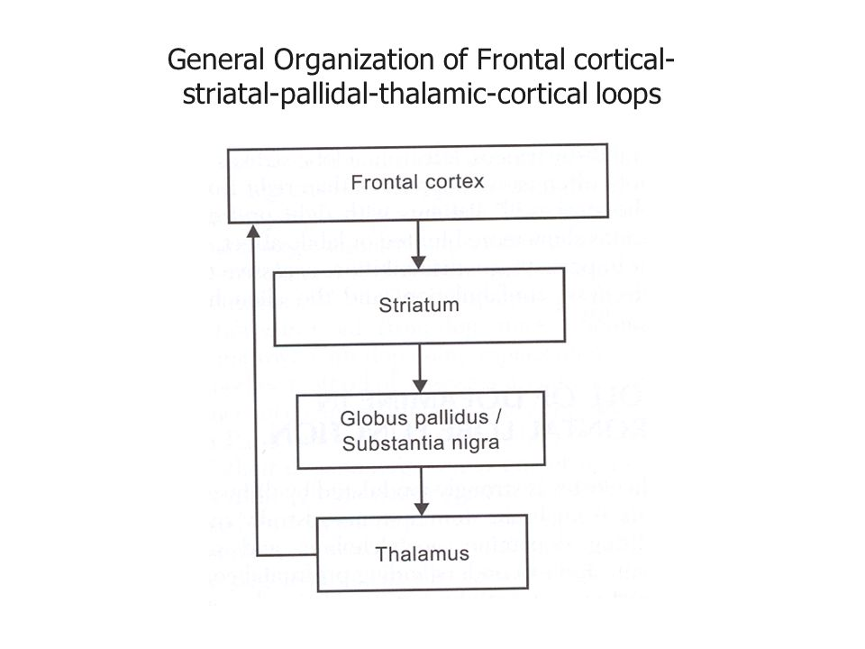 General Organization of Frontal cortical- striatal-pallidal-thalamic-cortical loops