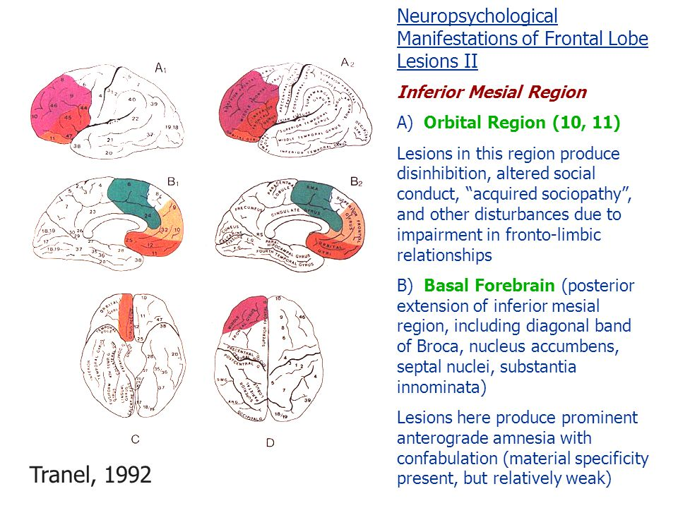 Neuropsychological Manifestations of Frontal Lobe Lesions II Inferior Mesial Region A) Orbital Region (10, 11) Lesions in this region produce disinhibition, altered social conduct, acquired sociopathy , and other disturbances due to impairment in fronto-limbic relationships B) Basal Forebrain (posterior extension of inferior mesial region, including diagonal band of Broca, nucleus accumbens, septal nuclei, substantia innominata) Lesions here produce prominent anterograde amnesia with confabulation (material specificity present, but relatively weak) Tranel, 1992