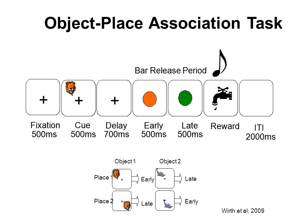 Object-Place Association Task Wirth et al, 2009