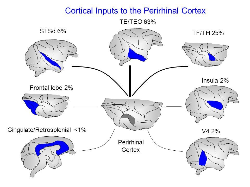 Dorsal area TE TF Orbital areas 11 and 13 V4/TEO Area TE Frontal area 8 and 45 Cortical Inputs to Area TE Perirhinal Parietal (LIPd)