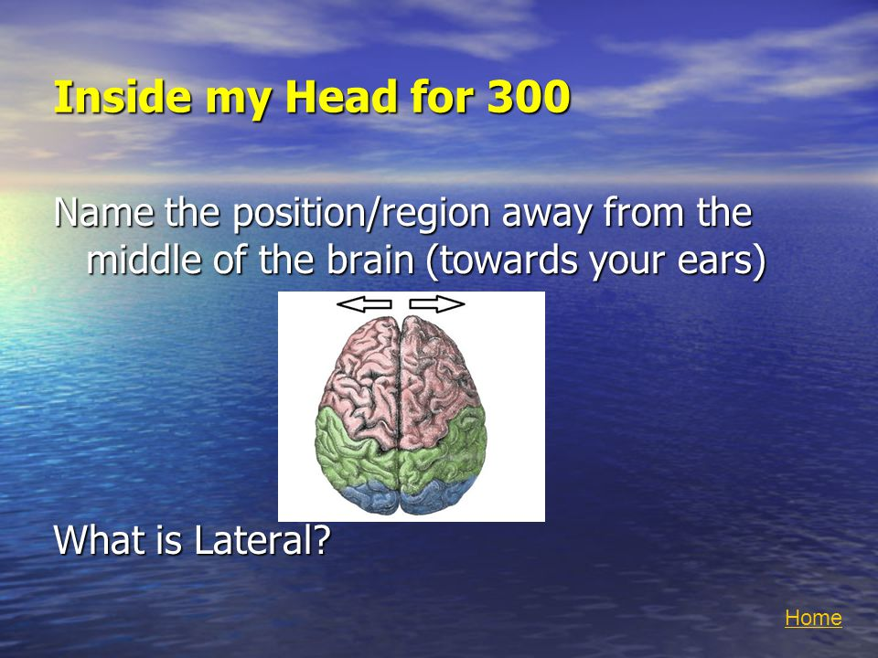 Inside my Head for 300 Name the position/region away from the middle of the brain (towards your ears) What is Lateral.