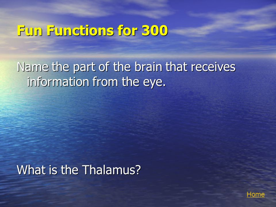 Fun Functions for 300 Name the part of the brain that receives information from the eye.
