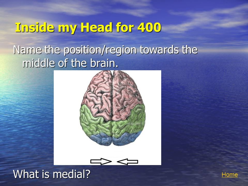 Inside my Head for 400 Name the position/region towards the middle of the brain.