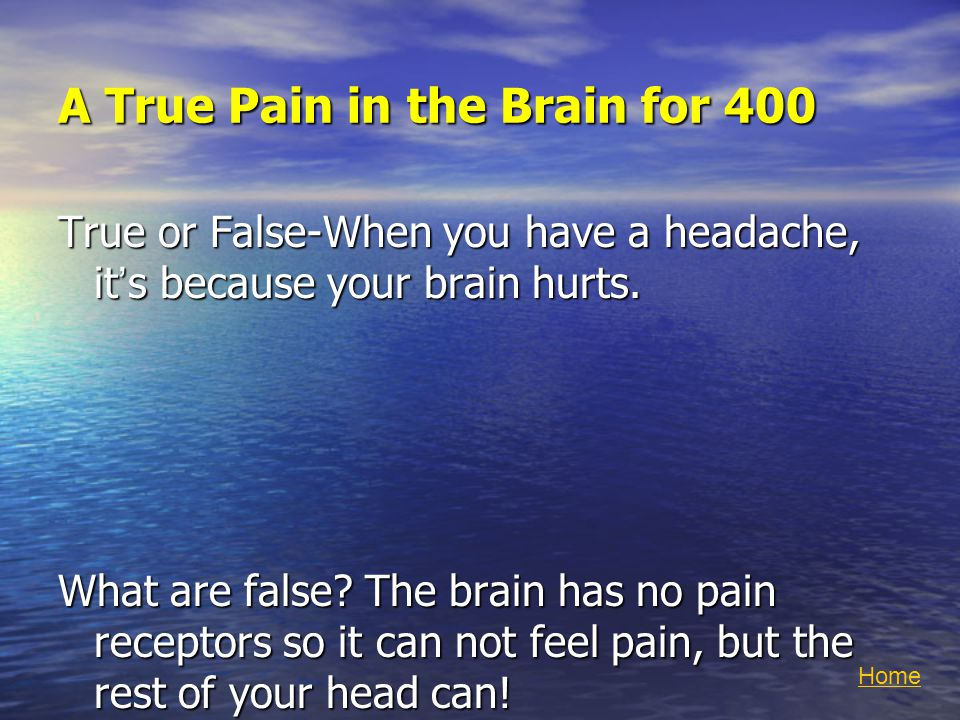 A True Pain in the Brain for 400 True or False-When you have a headache, it's because your brain hurts.