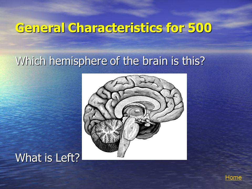 General Characteristics for 500 Which hemisphere of the brain is this What is Left Home