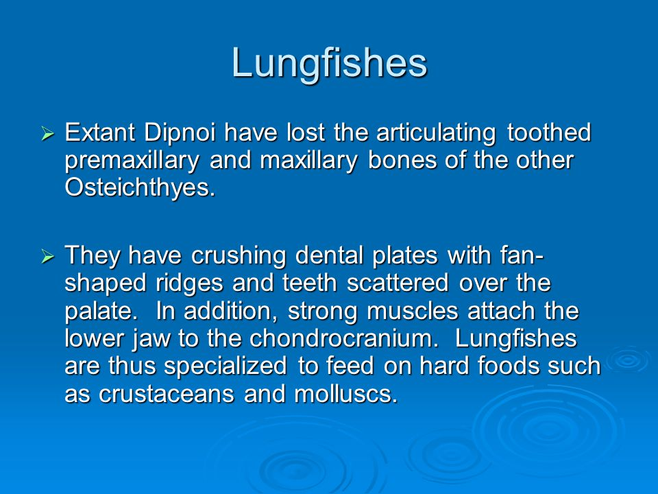 Lungfishes  Extant Dipnoi have lost the articulating toothed premaxillary and maxillary bones of the other Osteichthyes.