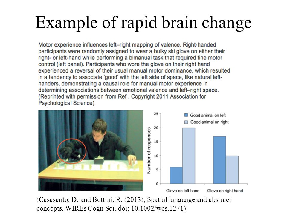 Example of rapid brain change (Casasanto, D. and Bottini, R. (2013), Spatial language and abstract concepts. WIREs Cogn Sci. doi: 10.1002/wcs.1271)