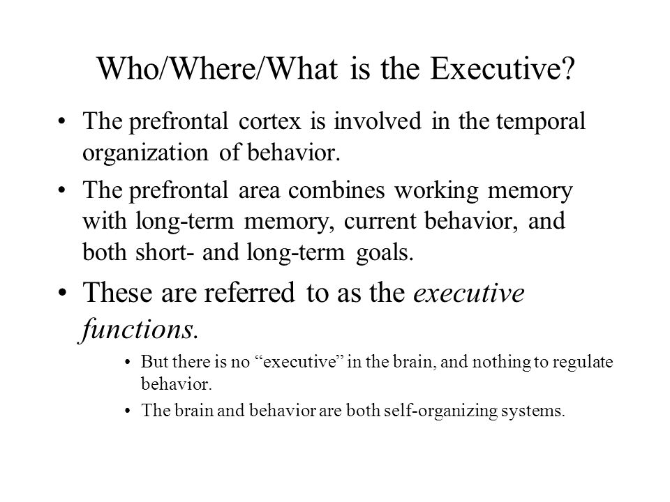 Who/Where/What is the Executive? The prefrontal cortex is involved in the temporal organization of behavior. The prefrontal area combines working memo