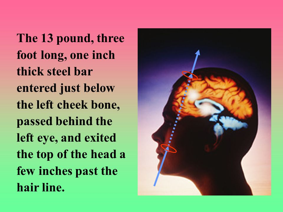 The 13 pound, three foot long, one inch thick steel bar entered just below the left cheek bone, passed behind the left eye, and exited the top of the head a few inches past the hair line.
