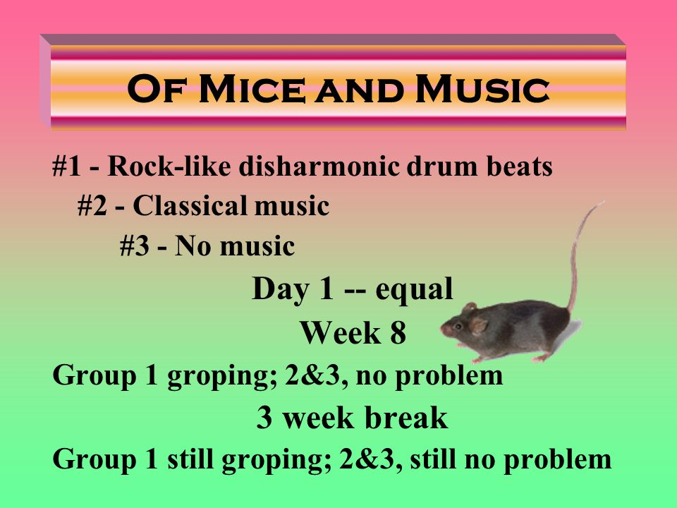 Of Mice and Music #1 - Rock-like disharmonic drum beats #2 - Classical music #3 - No music Day 1 -- equal Week 8 Group 1 groping; 2&3, no problem 3 week break Group 1 still groping; 2&3, still no problem