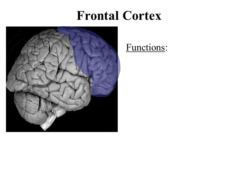 Frontal Cortex Functions:
