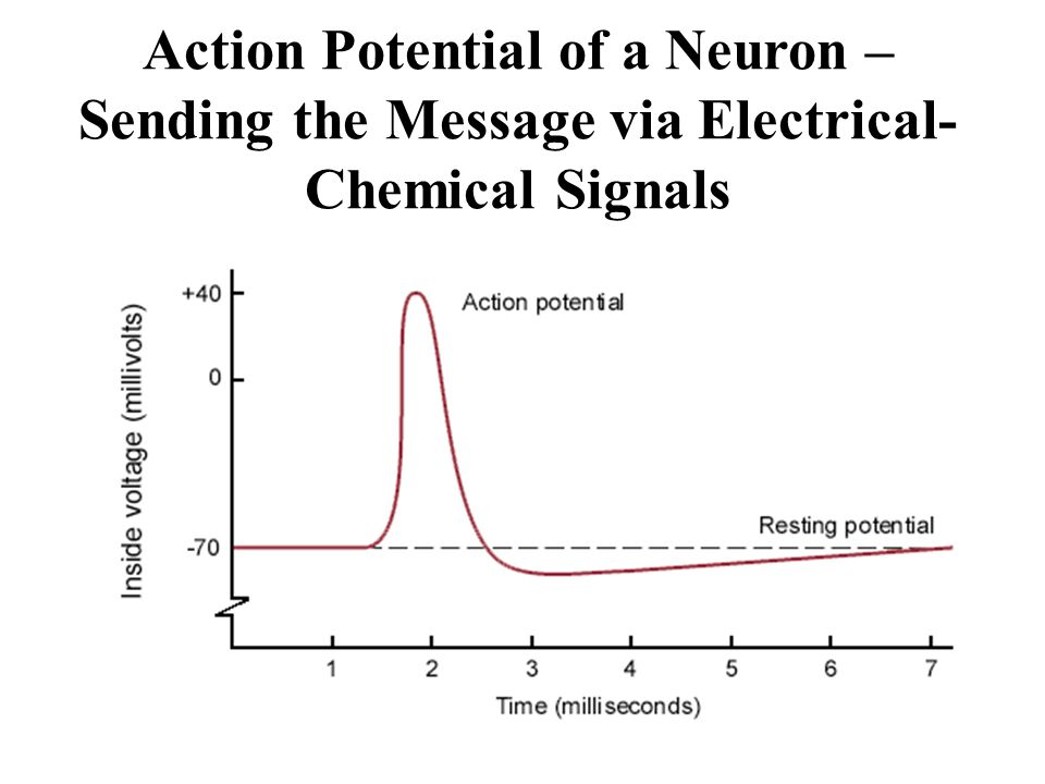 Action Potential of a Neuron – Sending the Message via Electrical- Chemical Signals