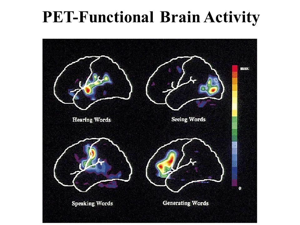 PET-Functional Brain Activity