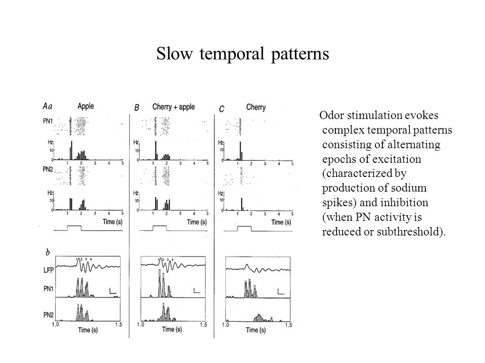 Slow temporal patterns Odor stimulation evokes complex temporal patterns consisting of alternating epochs of excitation (characterized by production of sodium spikes) and inhibition (when PN activity is reduced or subthreshold).