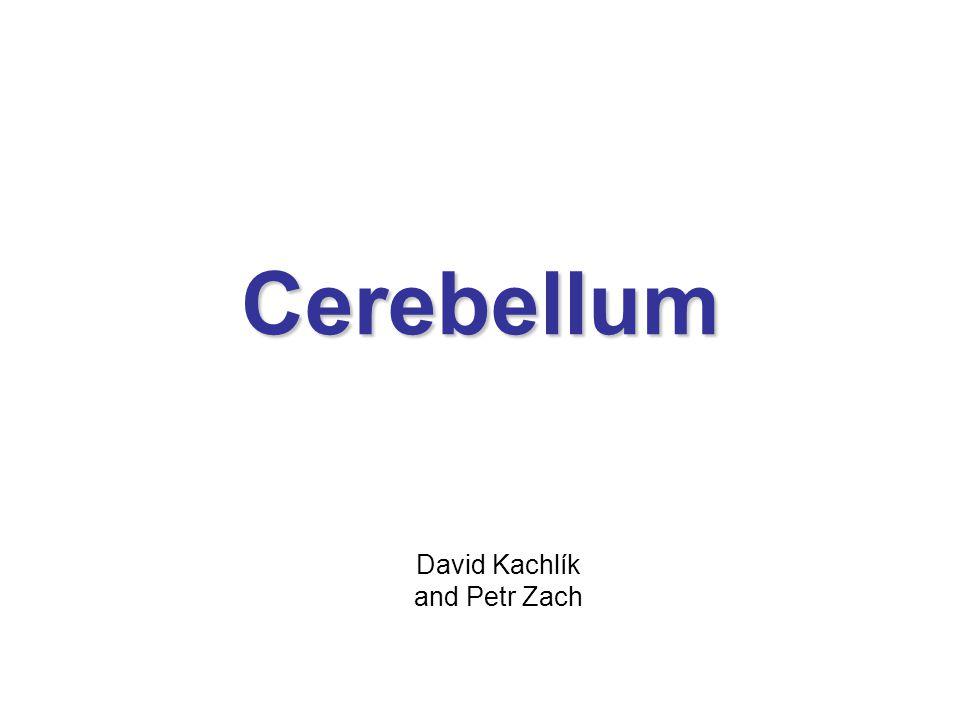 Cerebellum David Kachlík and Petr Zach