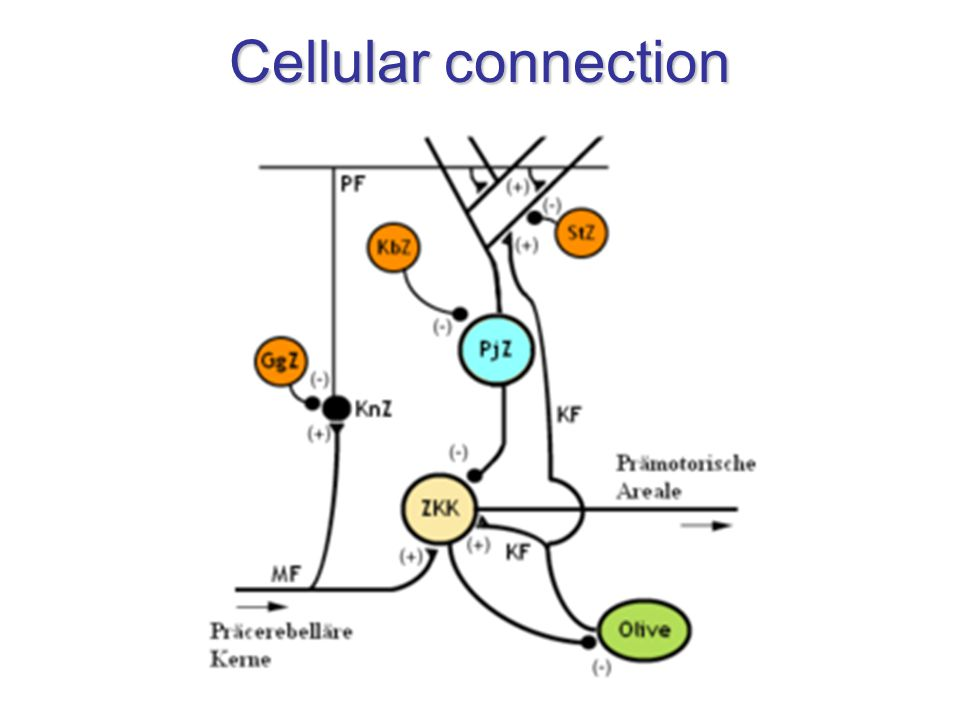 Cellular connection