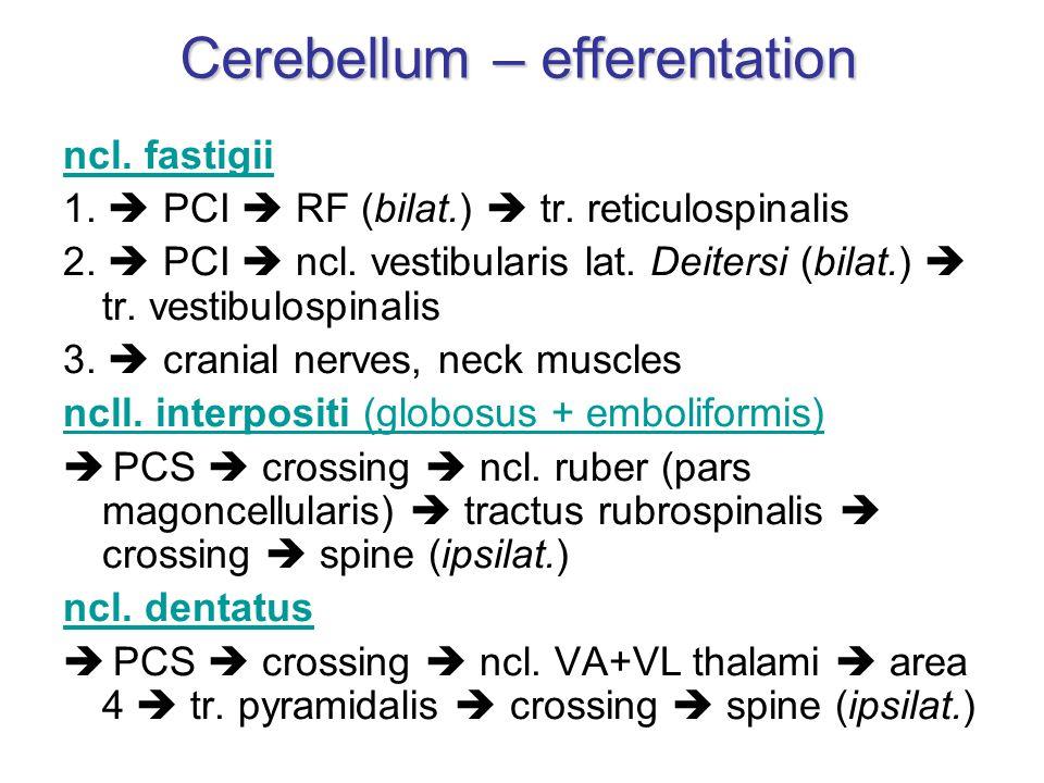 ncl. fastigii 1.  PCI  RF (bilat.)  tr. reticulospinalis 2.  PCI  ncl. vestibularis lat. Deitersi (bilat.)  tr. vestibulospinalis 3.  cranial n