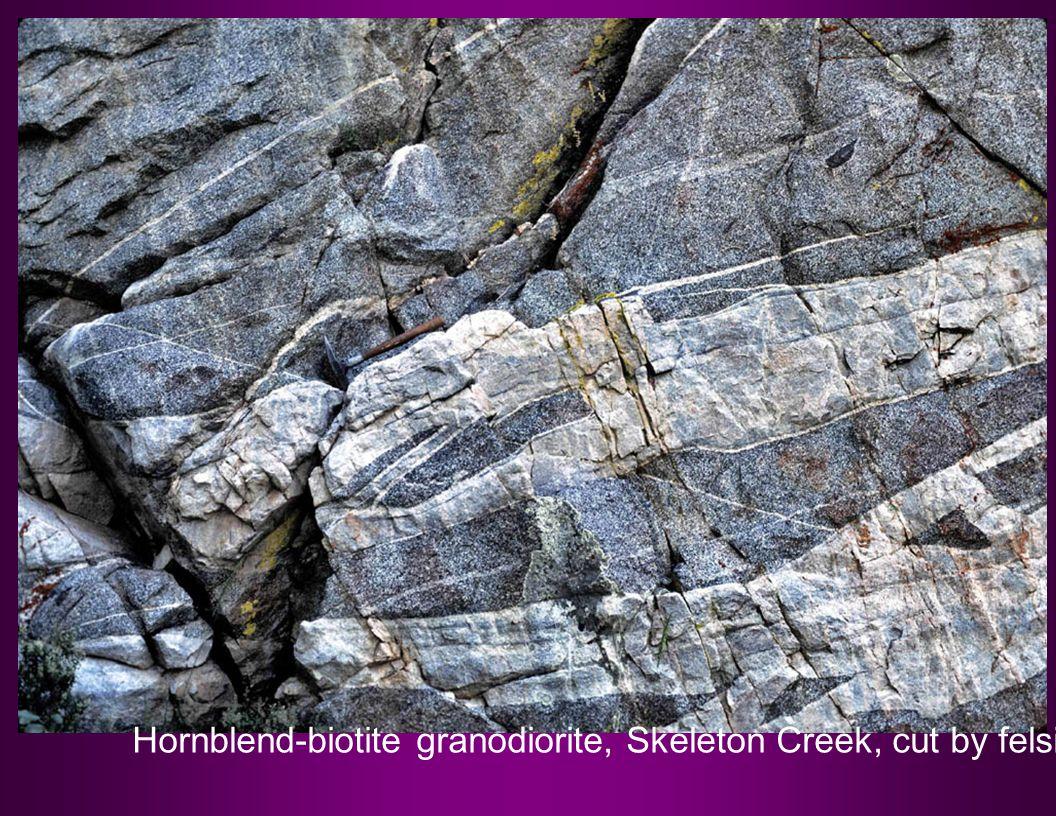 Hornblend-biotite granodiorite, Skeleton Creek, cut by felsic dikes, Photo by Reed Lewis