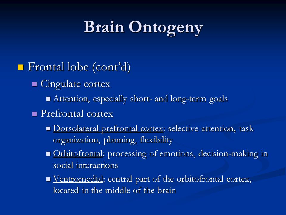 Brain Ontogeny Frontal lobe (cont'd) Frontal lobe (cont'd) Cingulate cortex Cingulate cortex Attention, especially short- and long-term goals Attentio