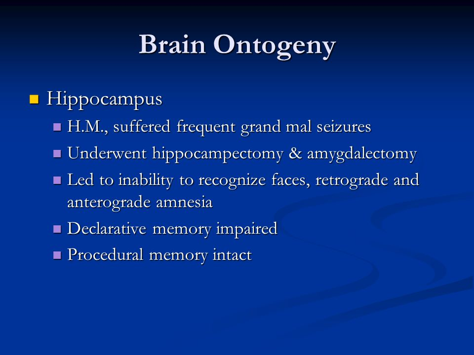 Brain Ontogeny Hippocampus Hippocampus H.M., suffered frequent grand mal seizures H.M., suffered frequent grand mal seizures Underwent hippocampectomy