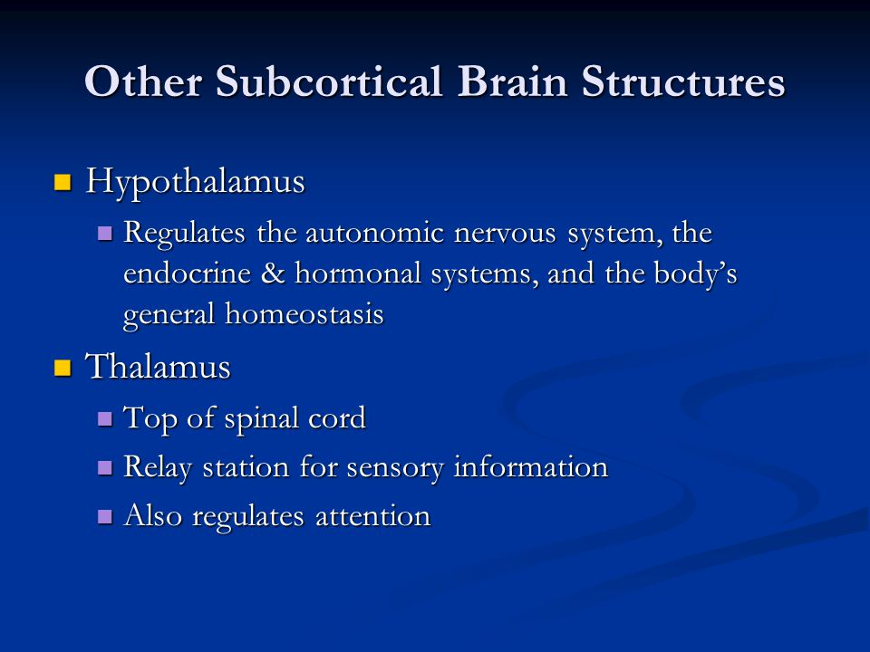 Other Subcortical Brain Structures Hypothalamus Hypothalamus Regulates the autonomic nervous system, the endocrine & hormonal systems, and the body's