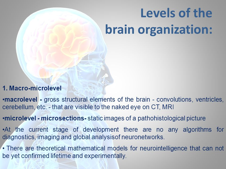 Levels of the brain organization: 1. Macro-microlevel macrolevel - gross structural elements of the brain - convolutions, ventricles, cerebellum, etc.