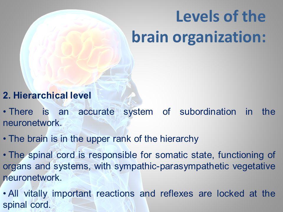 Levels of the brain organization: 2.