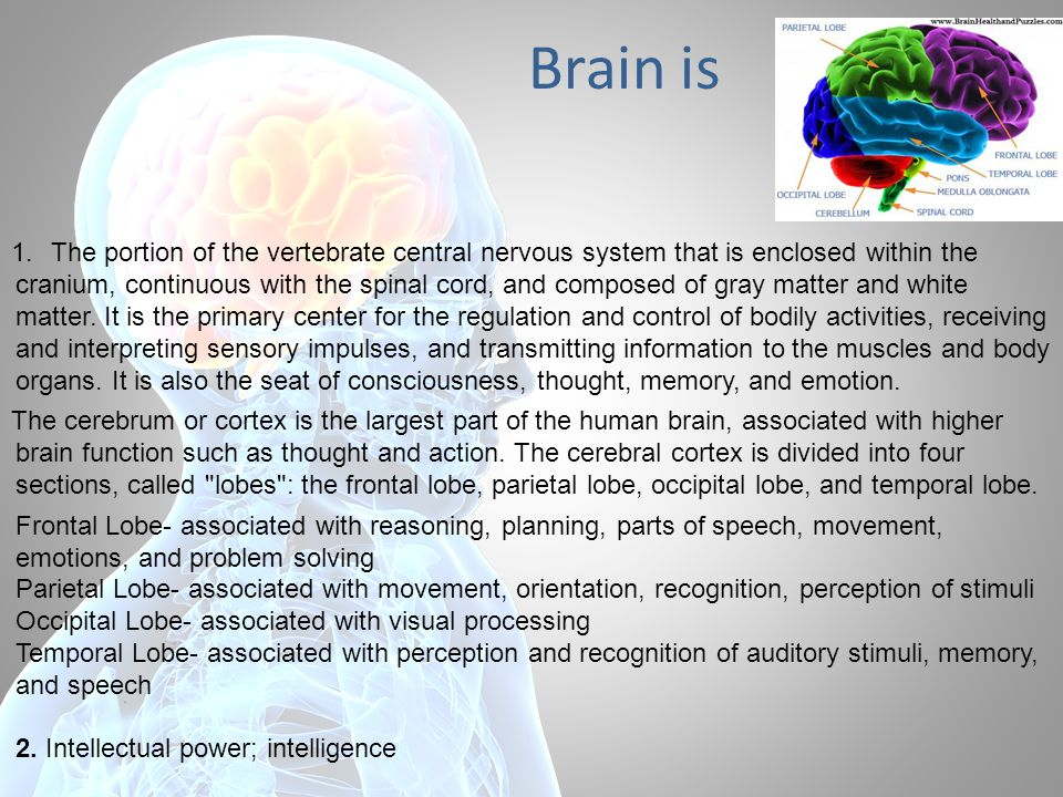 Brain is 1.The portion of the vertebrate central nervous system that is enclosed within the cranium, continuous with the spinal cord, and composed of gray matter and white matter.