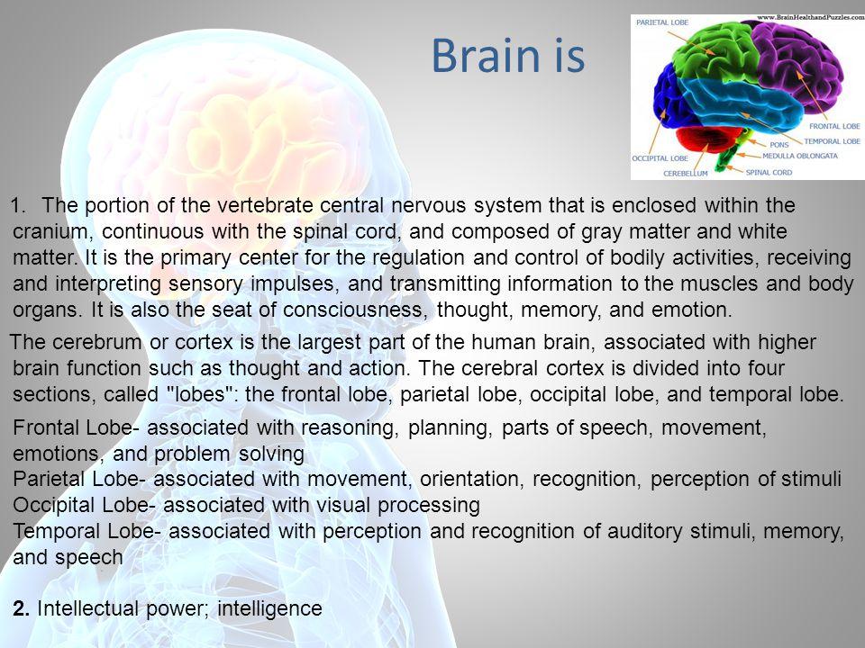 Levels of the brain organization: 1.