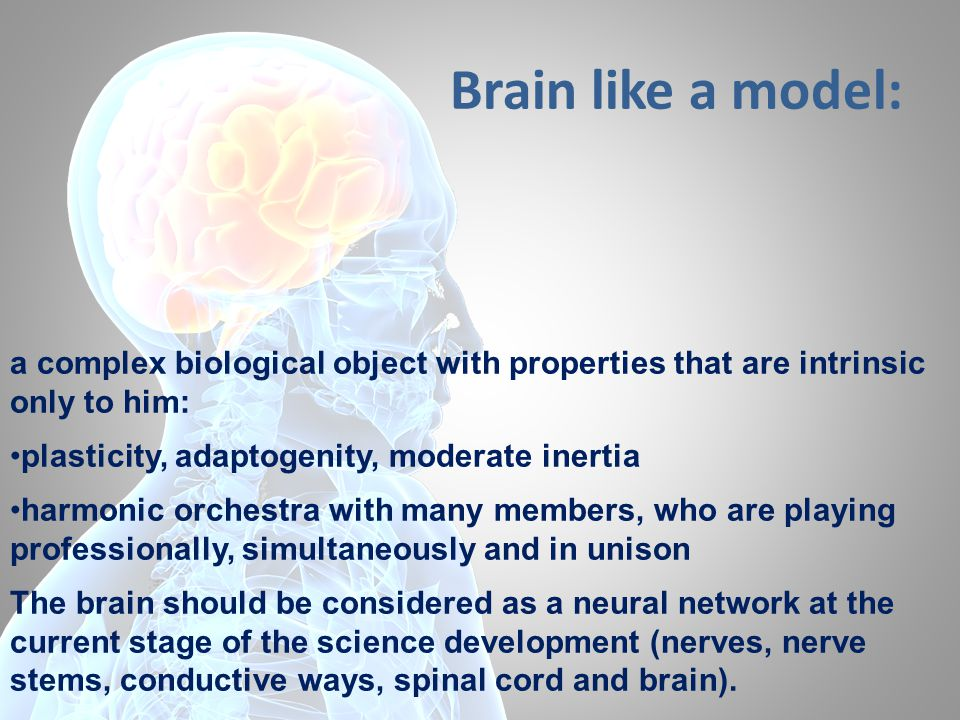 The brain is a Commander-in-Chief of the whole organism