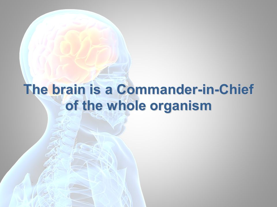 Brain and body The brain could not function separately from the body since it loses sense of its existence The body provides continuous blood supply and feeding for the brain, and a feedback system The body requires the brain as a control system