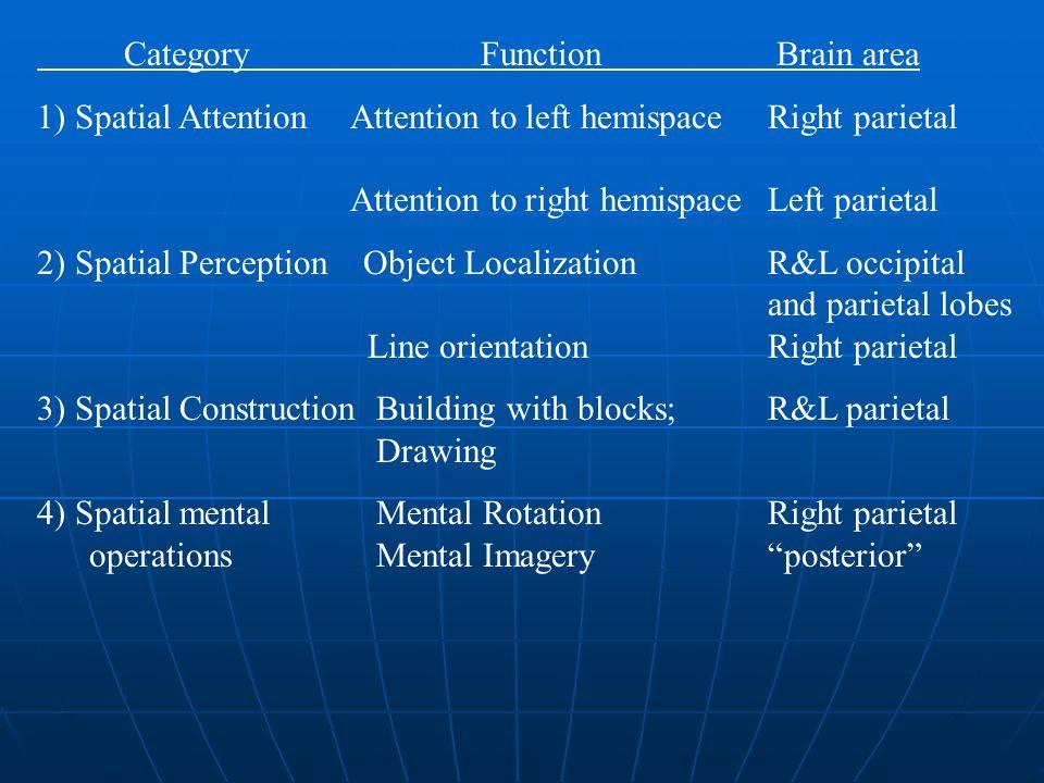 Category Function Brain area 1) Spatial AttentionAttention to left hemispaceRight parietal Attention to right hemispaceLeft parietal 2) Spatial Percep