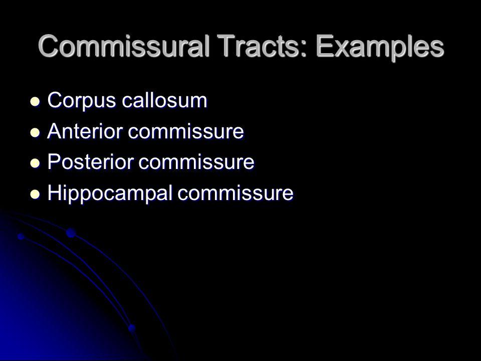 Commissural Tracts: Examples Corpus callosum Corpus callosum Anterior commissure Anterior commissure Posterior commissure Posterior commissure Hippoca
